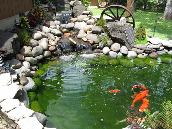 Lonnie dixie harris pond for Koi pond depth